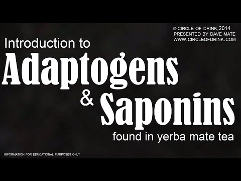 Adaptogenic Herbs and Saponins in Yerba Mate Tea Explained