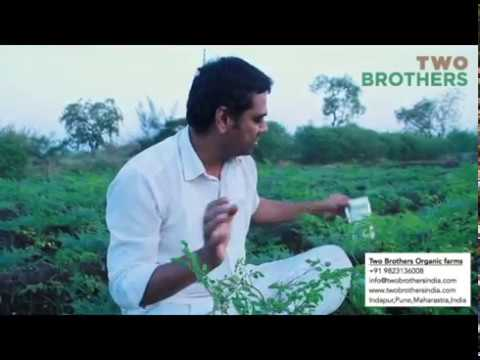 Two Brothers Organic Farms - AMOREARTH Moringa Powder