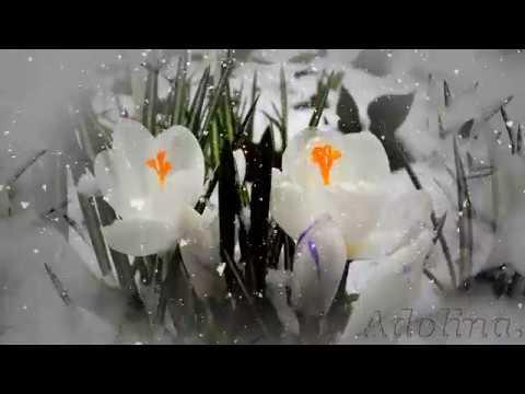 Ich wünsche Dir einen schönen Tag ...Winter geht... Frühling kommt