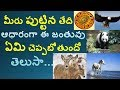 Based on your Birth Date which Animal you Belongs,||Astrology||V Prasad Helath Tips In Telugu||