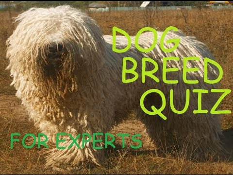 Dog Breed Quiz for Experts
