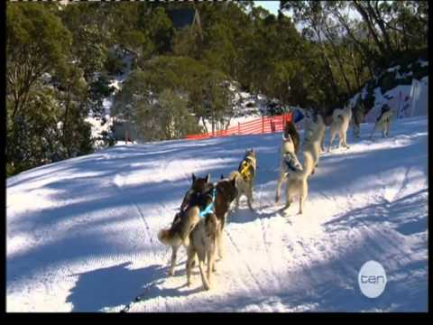 Howling Husky Sled Tours And Dr Chris Brown On The Living Room Youtube