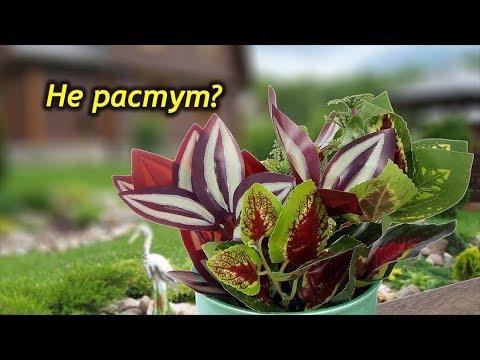 Почему не растут комнатные растения???
