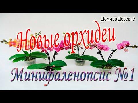Уход за орхидеями в -