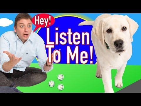 How to Train your Dog to Listen to you in Real Life!