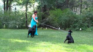 Mom, 2 Dogs And An Electric Fence Pt. 1