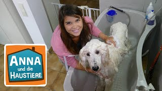 Ein Tag beim Hundefriseur | Information für Kinder | Anna und die Haustiere | Spezial