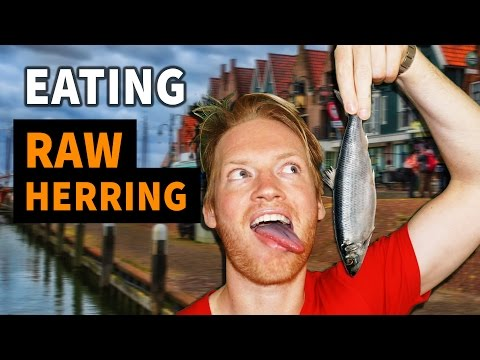 Eating Raw Herring in Holland