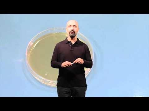 Coltura batterica su piastra Petri (tratto da Dal carbonio agli OGM)