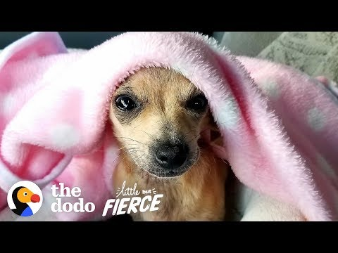 This Adorable Tiny Puppy Was Abandoned in a Doghouse  | The Dodo Little But Fierce