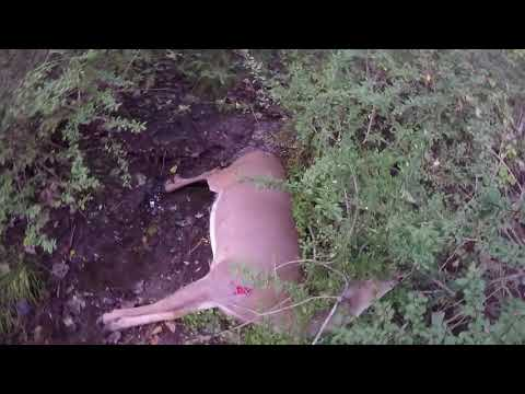 Connecticut Deer Hunting With Outkast Adventures