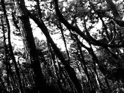 Schonwald - Rays - Anywave - 2014