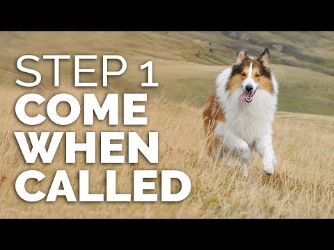How to Get ANY DOG Dog to COME WHEN CALLED - Step 1