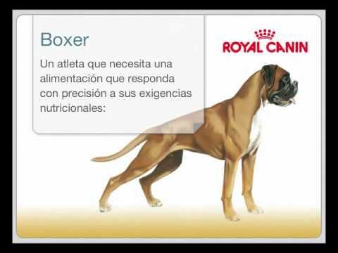 alimentos para razas - royal canin nutrición - youtube