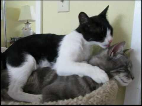 When Love Comes Around - Best Kitty Video!
