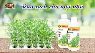 Hướng dẫn trồng thủy canh rau tại nhà
