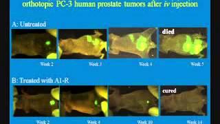 Tumor killing bacteria