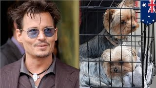 Johnny Depp's Dogs, Boo And Pistol, To Leave Australia After Government Death Threat - Tomonews