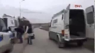 В Турции бродячие собаки загрызли 34 летнюю женщину