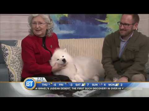 Inuk the American Eskimo Dog stops by!