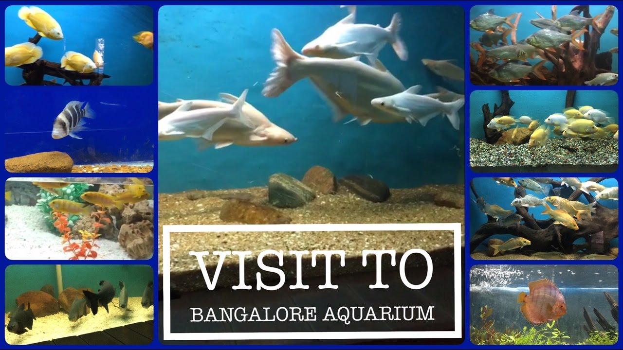 Fish for aquarium in bangalore - Visit To Bangalore Aquarium