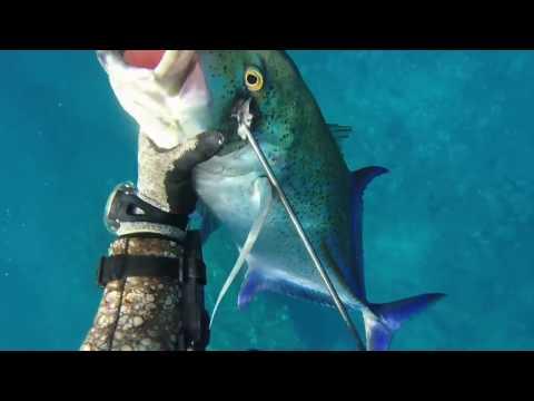 Spearfishing Hawaii - 4RD