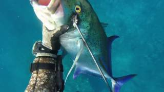 Spearfishing Hawaii - 4RD