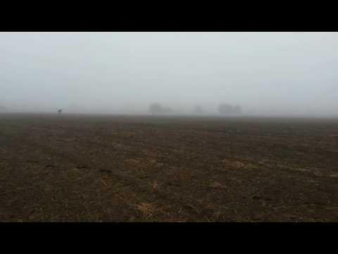 прикольный мультик Обкуренный Ёжик в тумане смотреть