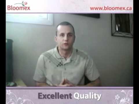 Halifax Florist-Call 902-482-4440 Bloomex Flowers