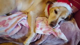 Christmas santa dog and elf baby