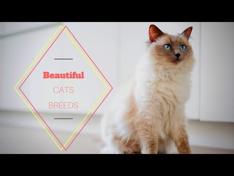 10 most Beautiful CAT Breeds | WFP |