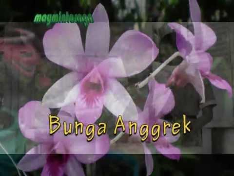 als de orchideen bloeien mp3