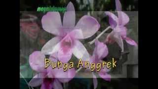 BOENGA ANGGREK. Ismail Marzuki