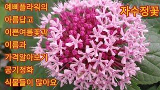 466회. 남사 화회단지 예삐플라워의 이쁜꽃과 가격알아…
