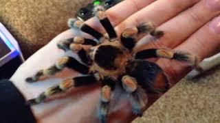 ТОП 3 самых безопасных пауков для человека