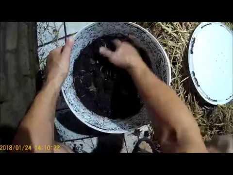 Хранение и содержание червей ( Дендры ) для рыбалки.