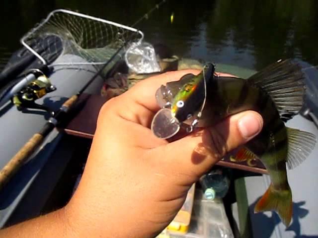 Первый окунь... рыба все таки клюет.
