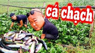 Lần Đầu Tiên Ăn Lẩu Cá Chạch Lục Bình - Không Nhịn Được Cười Với Pha Cà Khịa Này | Son Duoc Vlogs