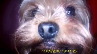Фильм про собаку Вилли Винки