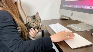 徹夜で仕事中の飼い主を強引に邪魔して怒られてしまった猫w