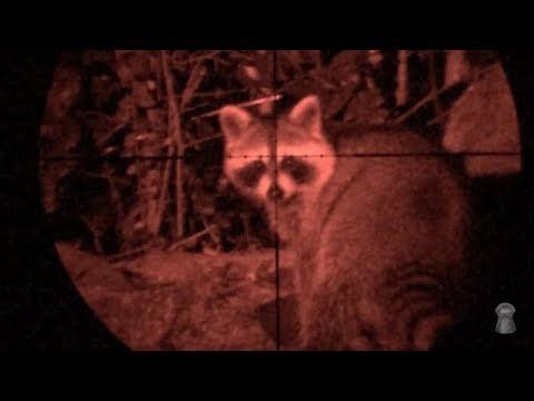 Raccoon Diapatch Problems - Airgun Nation