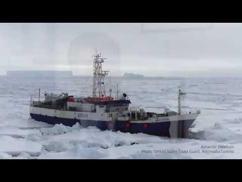 In Focus: Arctic Shipping