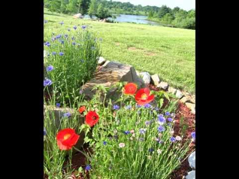 creating a wildflower garden - Wildflower Garden