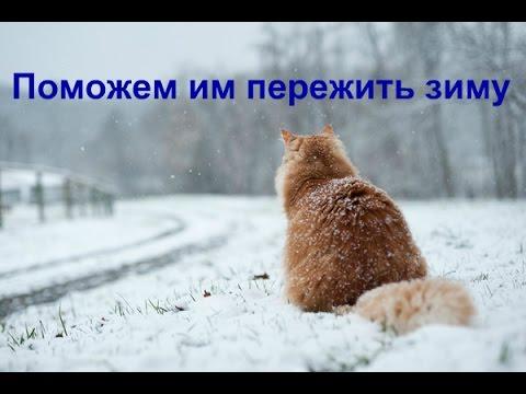 Вопрос: Где ночюют зимой бездомные кошки и собаки?