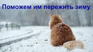 😻Бездомные кошки чуть не замерзли. Меня покусали)))