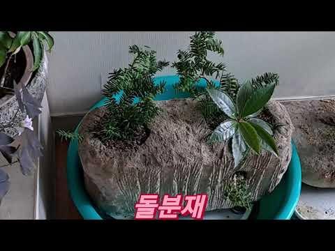 돌분재(stone bonsai)