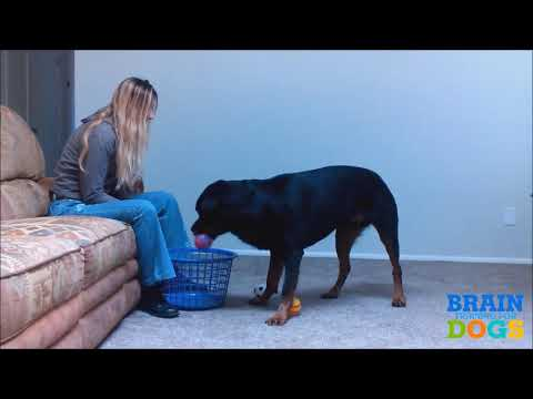 how-to-teach-your-dog-to-fetch-perfectly!-(dog-training-tutorial)