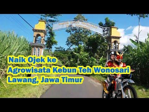 naik-ojek#-jalan-jalan-ke-agrowisata-perkebunan-teh-wonosari,-lawang,-jawa-timur-indonesia-(part-1)