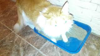 Отзыв о наполнителе для кошачьего туалета Indian cat litter