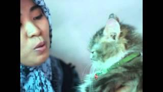 Repeat youtube video Cara mengenali kucing jantan dan betina